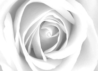 LIENZO DOBLE CAPA IMAGEN 160001